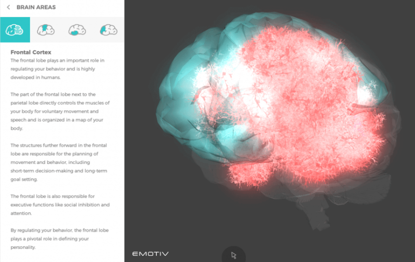 Image showing the frontal cortex of the human brain being visualized for behavioral neuroscience research