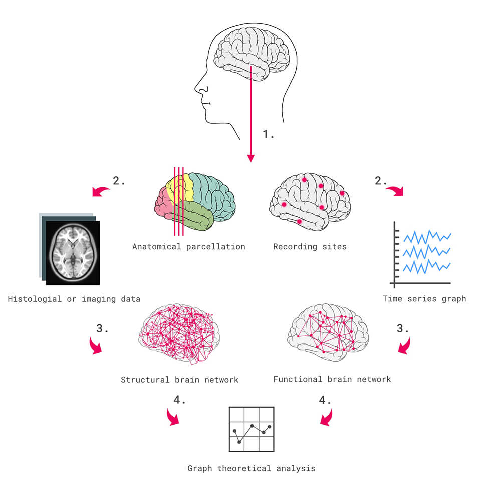 Neuroscience Diagram depicting the process of conducting theoretical analysis.